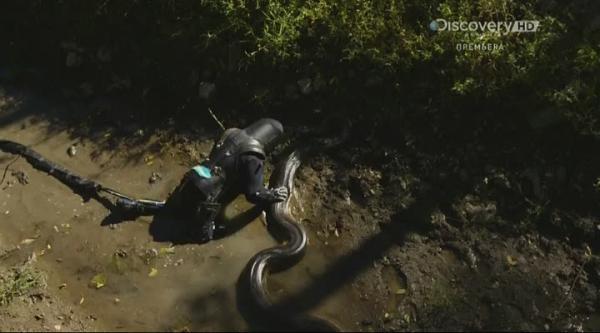 ��������. ��������� ������ / Anaconda. Eaten Alive (2014)