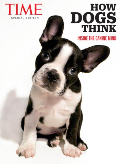 TIME How Dogs Think Inside the Canine Mind